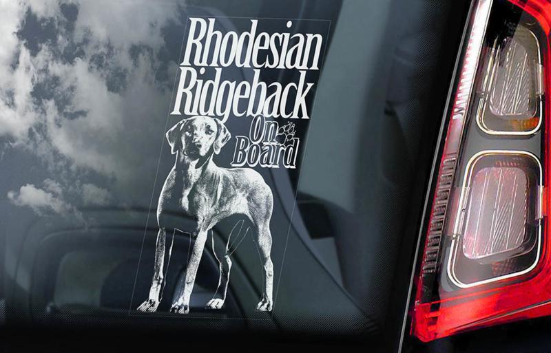 Rhodesian Ridgeback V02