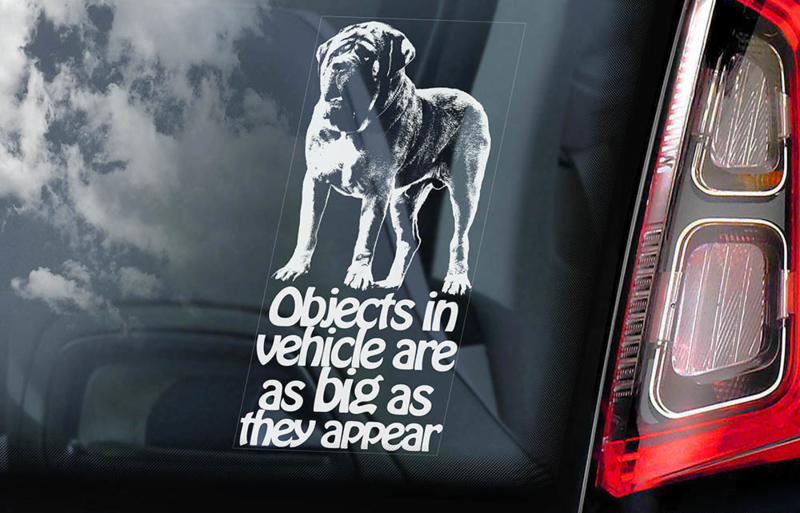 Old English Mastiff V04
