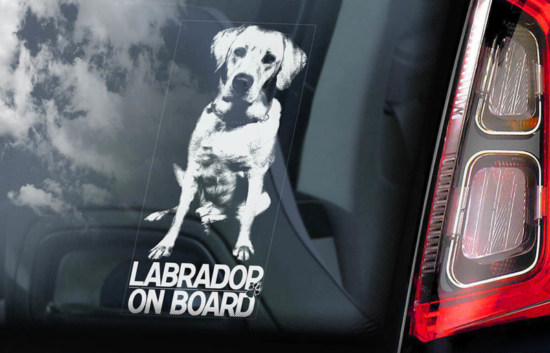 Labrador Retriever V01