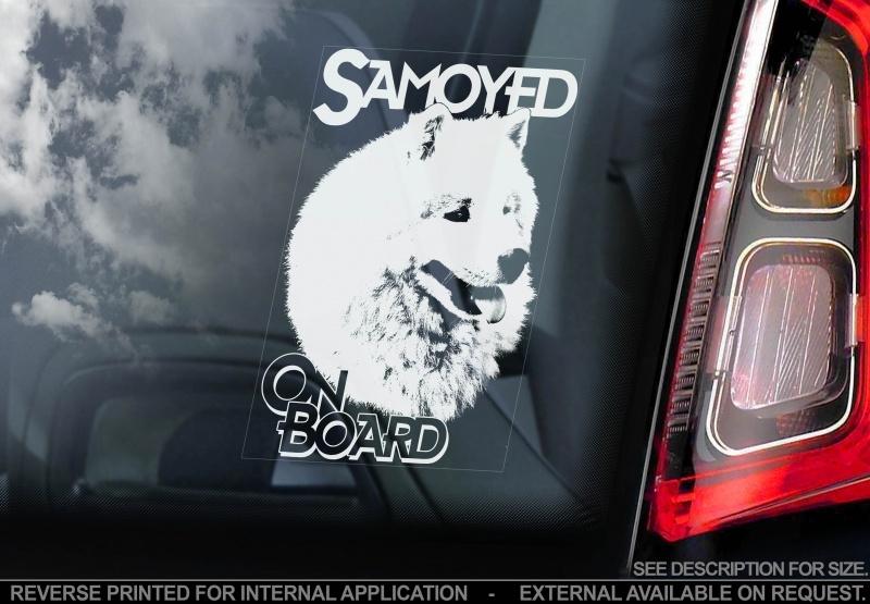 Samojeed - Samoyed  V01 INSIDE