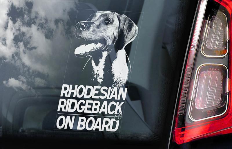 Rhodesian Ridgeback V01