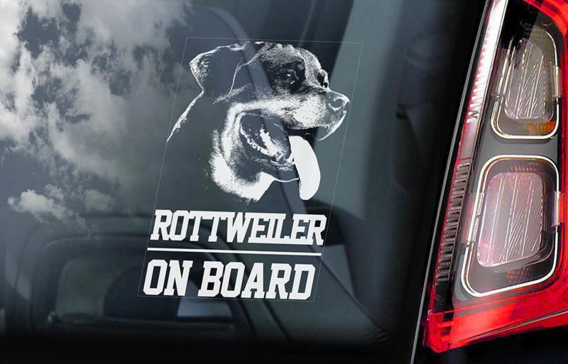 Rottweiler V01