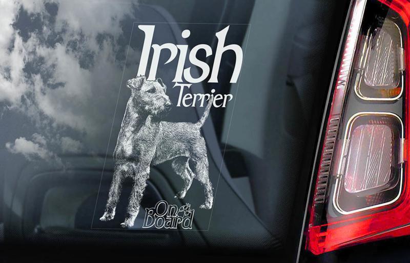 Ierse Terrier - Irish Terrier V01 INSIDE