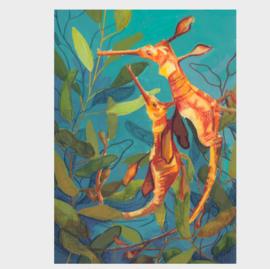 Ansichtkaart | zeepaard