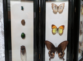 Oud vierluik vlinderkastje VERKOCHT