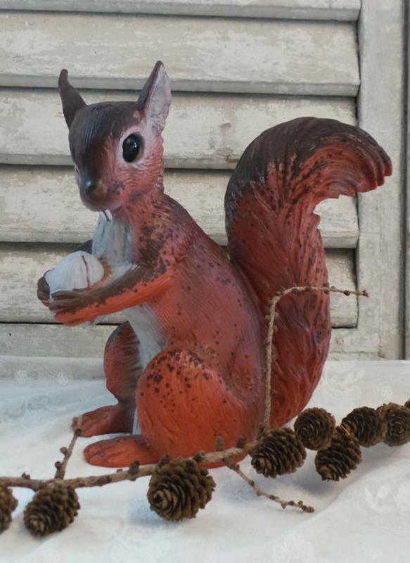 Oude eekhoorn