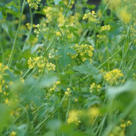 30-8-2021  Wilde bloemen zaaien, een waardevolle les