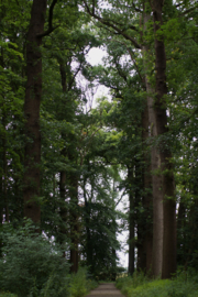 15-07-2019 Landgoed Oostbroek