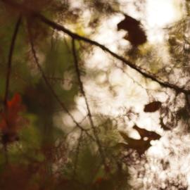 30-10-2019 Sprookjes in Landgoed Clingendael