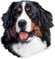 D13 Bernese Mountain Dog