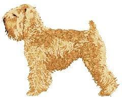 DJ 242 Irish Soft Coated Wheaten Terrier (body)