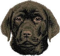 D 55 Labrador Retriever zwart puppy