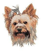 DV 216  Yorkshire Terrier