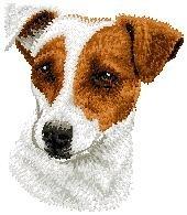 D 26 Jack Russel Terrier