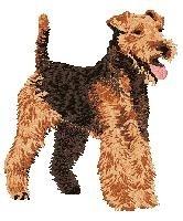 DJ 241  Welsh Terrier