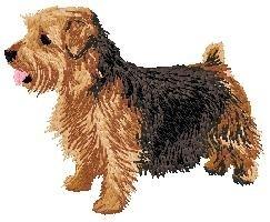 DJ 277  Norfolk Terrier