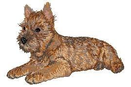 DV 258  Cairn Terrier