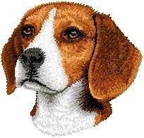 D 31 Beagle