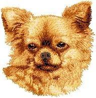 D 30  Chihuahua