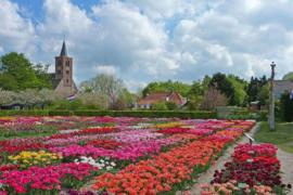 Bezoek aan de Hortus Bulborum in Limmen, woensdag 15 april 2020