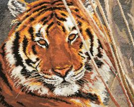 Tiger - Alisa