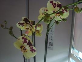 bloemen abonnement