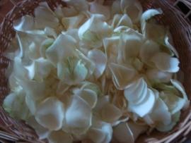 rozenpluk