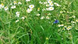 Bloemen en Kruidenmengsel 1