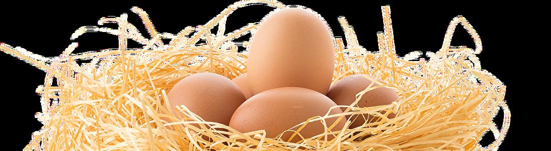 eieren (2).png