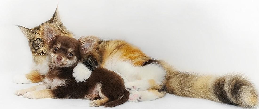 hond en kat (2).jpg