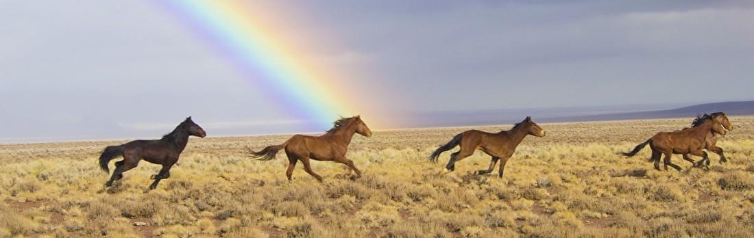 wilde paarden (2).jpg