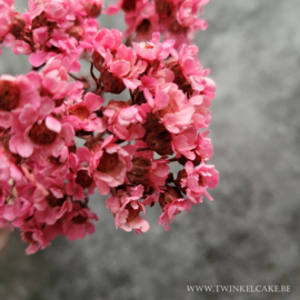Pink Fever #5