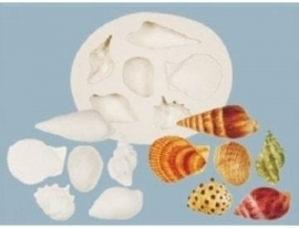 FPC Sea Shells