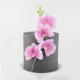 FMM Moth Orchid (Orchide) set 3 st