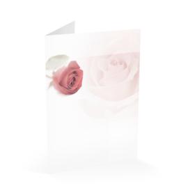 Rode roos linksboven