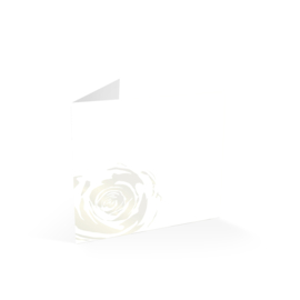 Witte Roos Parelmoer