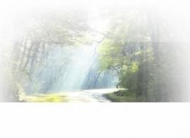 Lichtstraal bospad