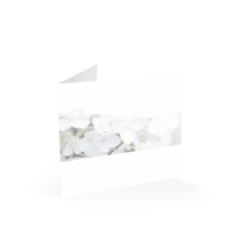 Witte Hortensia in balk