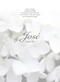 Grote witte hortensia