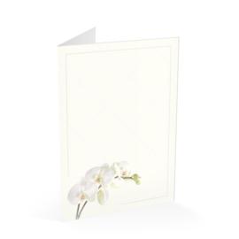 Ivoor orchidee wit