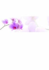 Orchidee in Balk