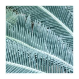 Vierkant 'Palmbladeren'