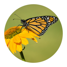Cirkel 'Vlinder'