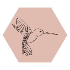 Zeshoek 'Kolibrie'