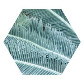 Zeshoek 'Palmbladeren'