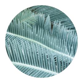 Cirkel 'Palmbladeren'