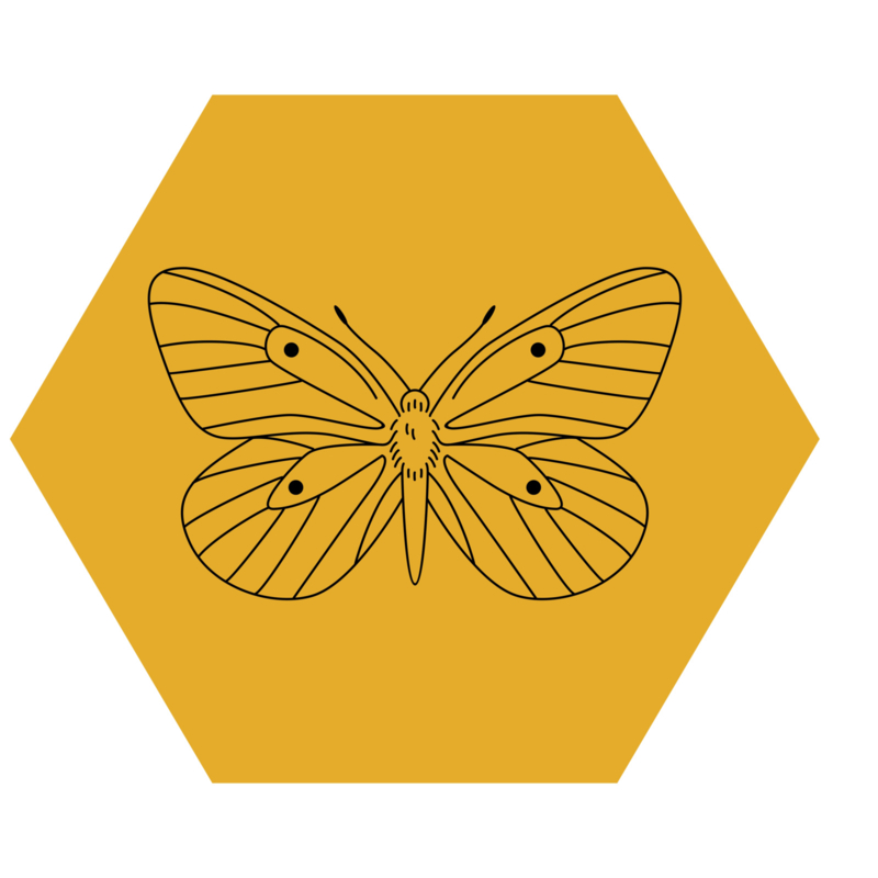 Zeshoek 'Vlinder'