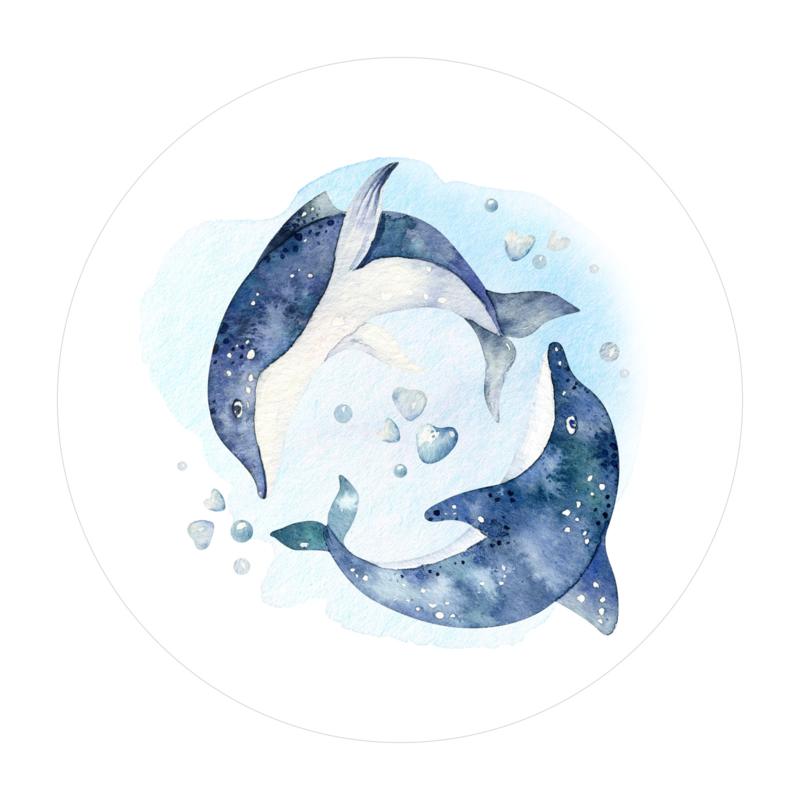 Cirkel 'Dolfijnen'
