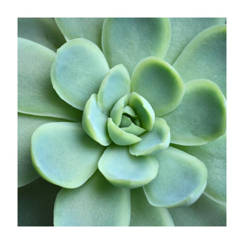 Vierkant 'Vetplantje'