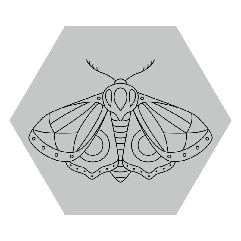 Zeshoek 'Nachtvlinder'